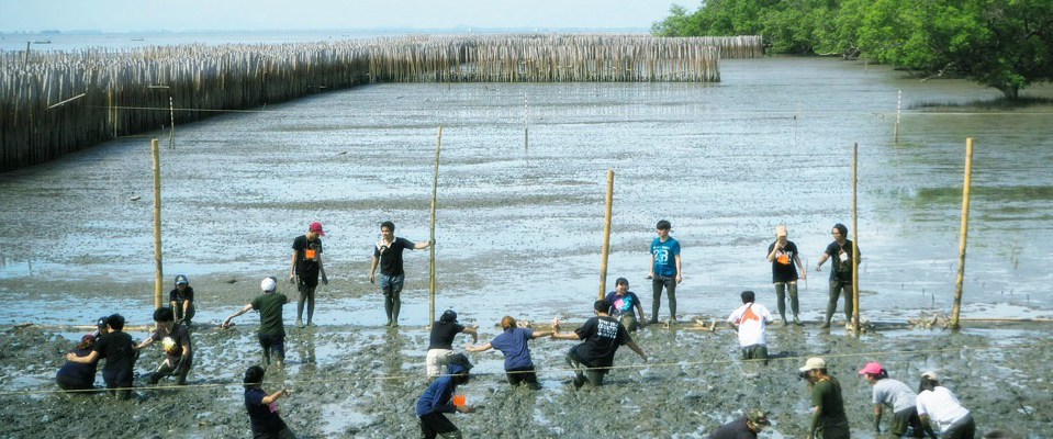 MSME students planting mangroves